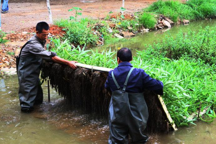 水上浮板种菜改善环境 没有虫子直接摘来吃