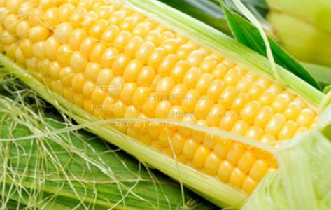 """玉米拍卖呈现""""三高""""特征 去库存任务任重道远"""