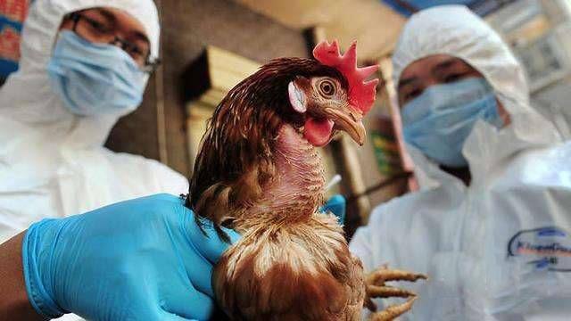 北京市卫生计生委最新消息:北京上周两人感染H7N9死亡