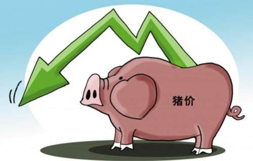 """猪肉价格跌破""""7""""创24个月新低 端午临近猪价还能回暖吗?"""
