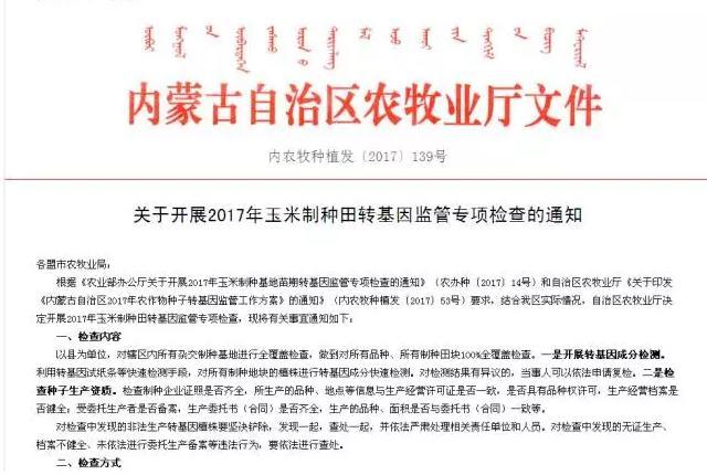 内蒙古开展转基因玉米专项检查 发现非法种植坚决铲除