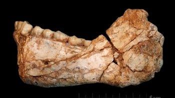 摩洛哥现智人化石 距今已有约30万年历史