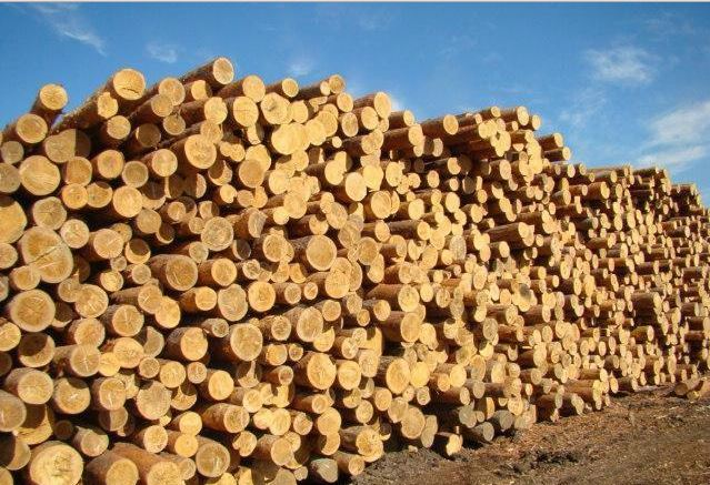 赞比亚下降木材出口税 降幅超50%