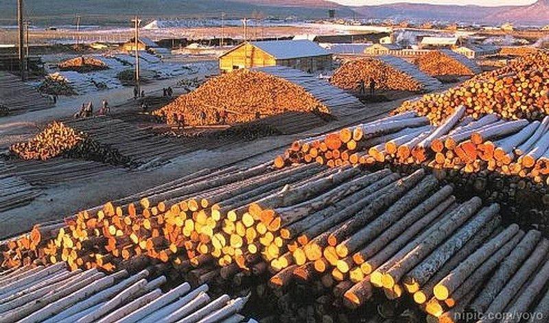 需求减少淡季来临 木材行业整体价格下降