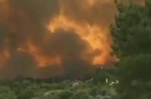 葡萄牙中部森林火灾 已经导致至少43人遇难