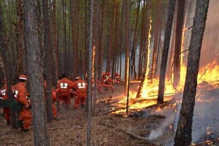 葡萄牙森林火灾 目前火势还未得到有效控制