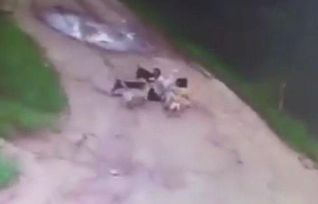据报道,他在被第一只狗攻击两分钟后死亡。警方在第二天早上发现尸体后发起调查。目前尚不知道,是否会对这群流浪狗采取任何行动。