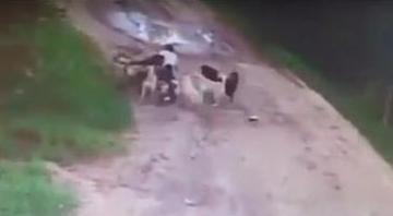 男子遭狗围攻身亡 两年间一直给流浪狗喂食