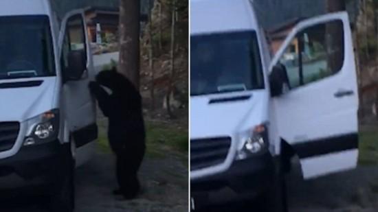 黑熊老司机惊车主 上车鸣笛下车不忘顺走一瓶饮料