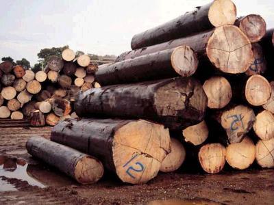 老挝政府关闭非法木材加工厂和家具厂
