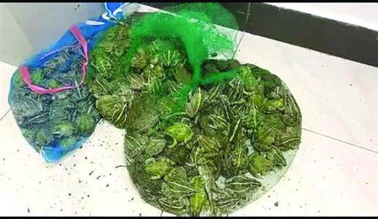 男子售卖青蛙被拘 鼓楼警方破获一起非法狩猎案