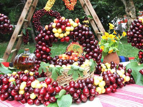 保加利亚樱桃节开幕 樱桃以颗粒饱满甜度高品种多且口感好而闻名