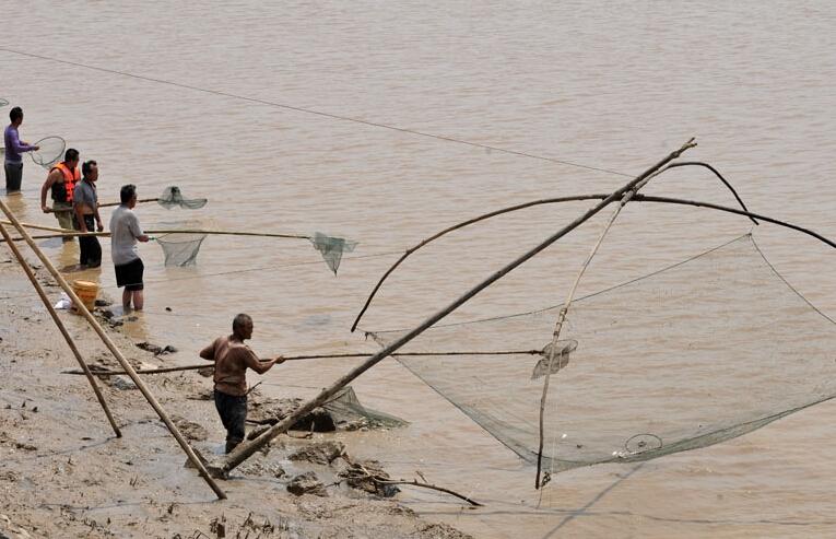 三门峡水库开闸放水 黄河居民冒险下河捞鱼
