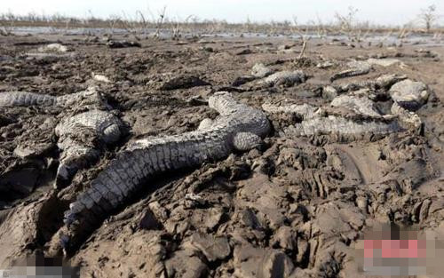 地球第六次大灭绝 科学家表示速度之快超出预期