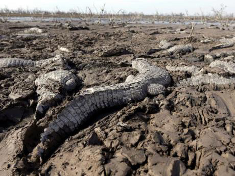 地球第六次大灭绝 速度之快超出预期
