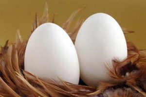 鹅蛋图片和介绍
