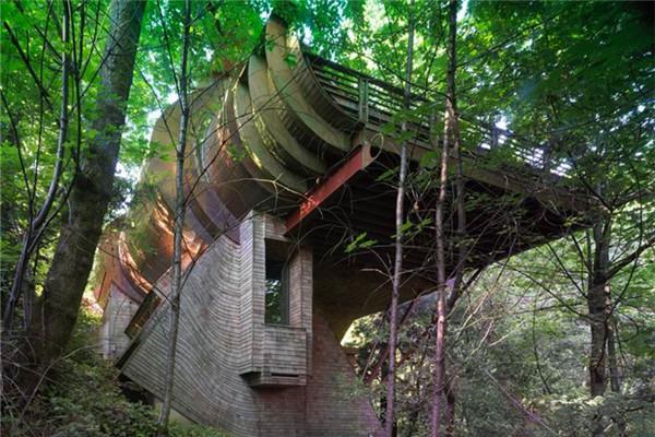 Wilkinson豪宅:在树荫下与大自然亲密接触