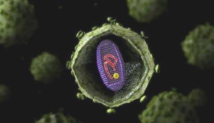 HIV疫苗试验结果:100%产生了对抗HIV的抗体