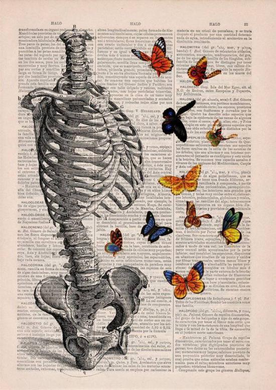 蝴蝶和骨架
