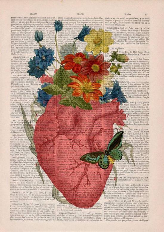 野花和肺。