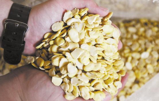 豆粕替代压力仍较大 美豆单产意外上调