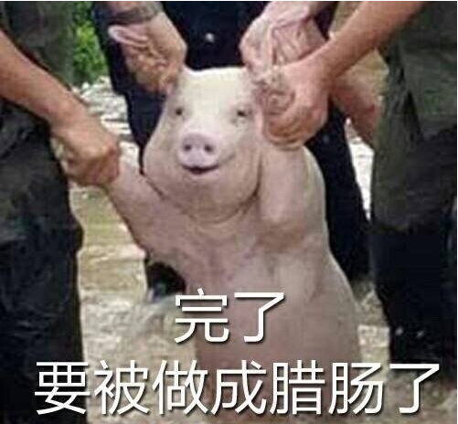 受灾猪被做表情包 二师兄笑得像个200斤的孩子