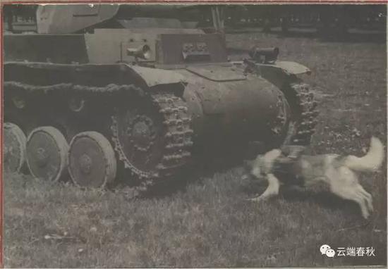 苏联军犬反坦克却炸死不少己方士兵 历史上真实的情况并非如此