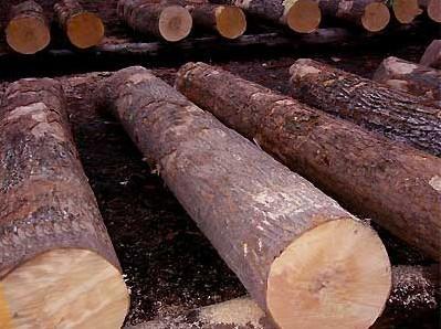 东南亚国家禁止木材出口 木材市场迎新一轮涨价