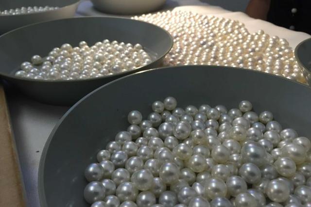 澳大利亚北部珍珠养殖场迎来丰收季节 惊现两颗罕见天然珍珠