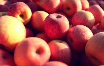 苹果延寿益智抗抑郁 哪些人不宜吃苹果