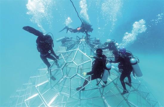 海南陵水分界洲岛海底搭建2座珊瑚培育铁塔 助力珊瑚人工培育
