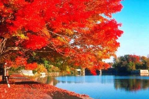 四川看红叶的15个好地方
