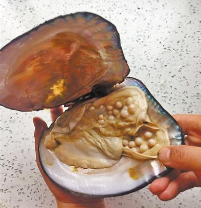 意外之喜!老家寄来的河蚌内暗藏60余颗珍珠 最大直径达1厘米
