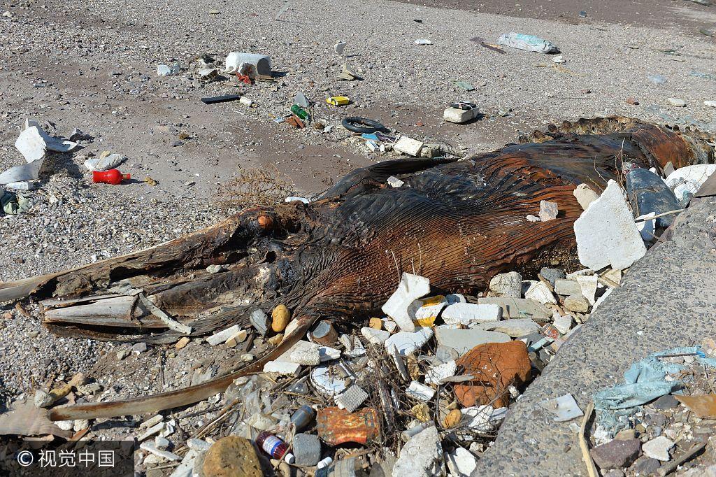 青岛海滩现巨型生物遗骸 高度腐烂看不出为何种生物