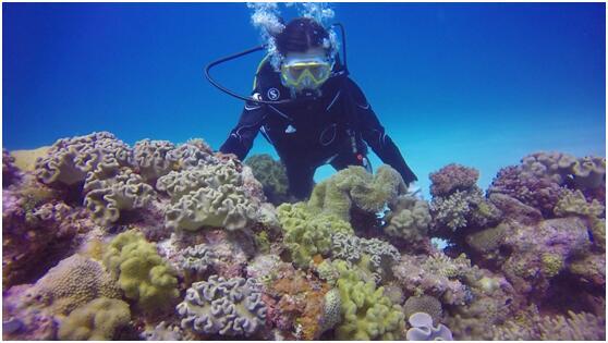 纪录片《守护南海珊瑚林》将于13日晚8点在北京电视台首播
