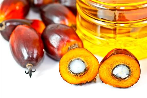 9月12日亚洲棕榈油现货价格上涨