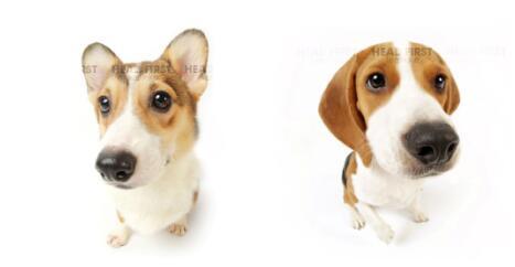 国际超级IP品牌HEAD FIRST(美国)大头狗正式登陆中国珠宝市场