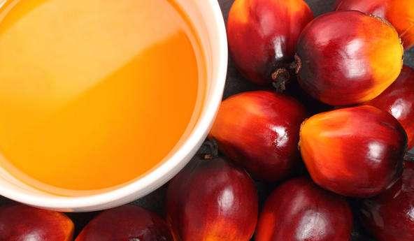 亚洲棕榈油现货价格周三上涨