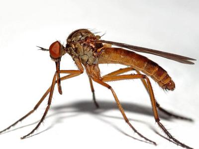 广州居民叫好每天放一百万只蚊子 大学生让蚊子不育不孕