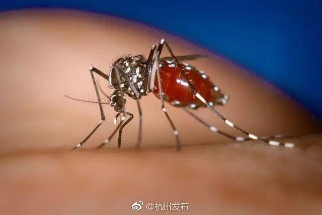 杭州市登革热疫情信息:累计报告登革热病例951例