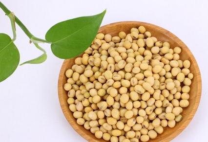 大豆的营养价值及做法 多吃可防癌养生