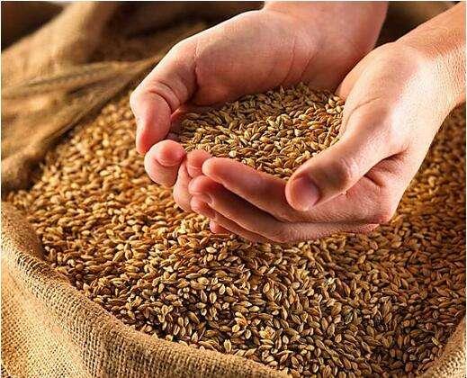 美小麦期货影响因素