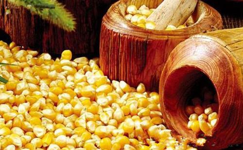 CBOT玉米期货周四收跌 玉米现货价格互有涨跌