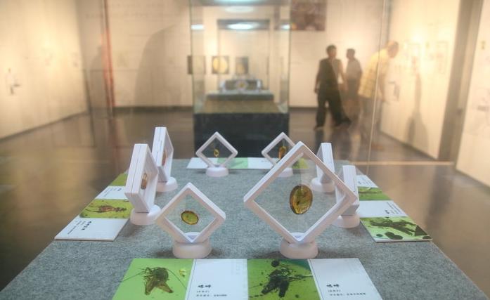 """""""凝固时光的宝石——虫珀科普展""""在中国湿地博物馆开展"""