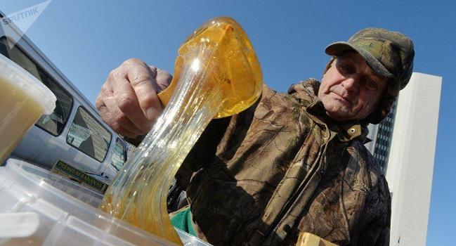 俄蜂蜜禁入中国 超过1.2吨的蜂蜜已退回俄罗斯