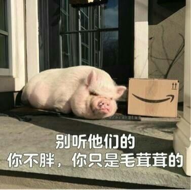 精致的猪猪女孩
