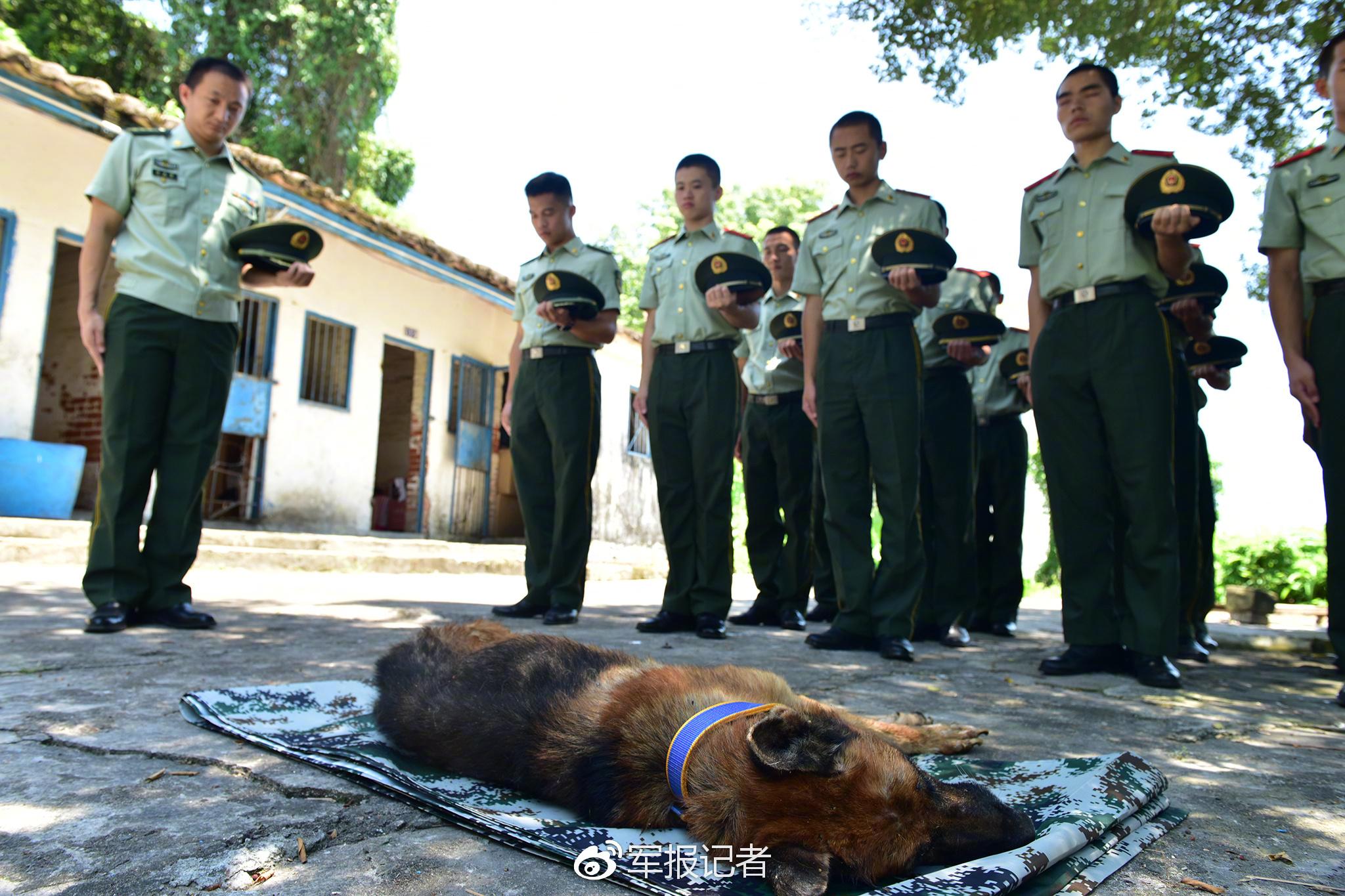 功勋犬去世 中国军人致其以军人最崇高的礼节