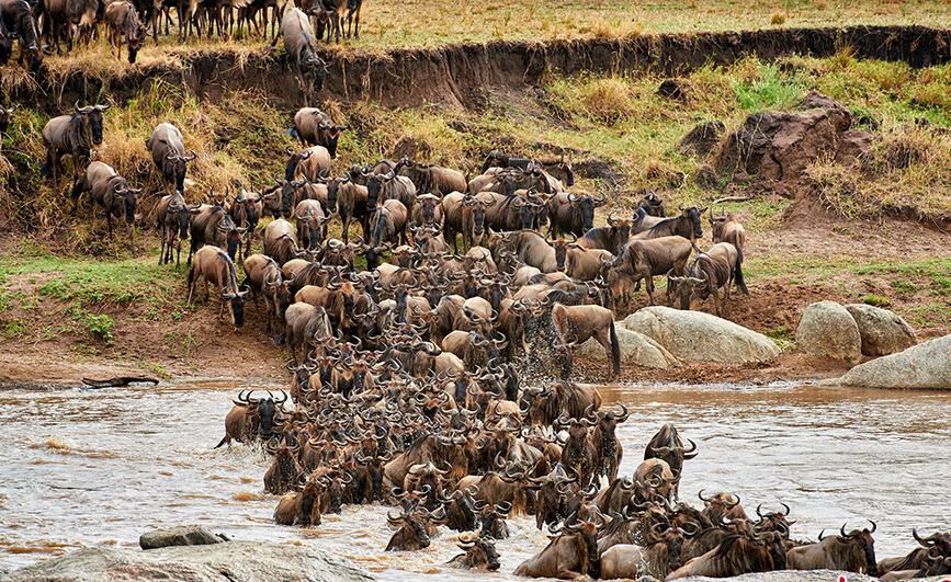 坦桑尼亚塞伦盖蒂国家公园:塞伦盖蒂国家公园是坦桑尼亚历史最悠久也是最受欢迎的国家公园,同时也是世界文化遗产之一。其最为著名的是一年一度的动物大迁移,主角是成千上万的斑马、瞪羚、牛羚。