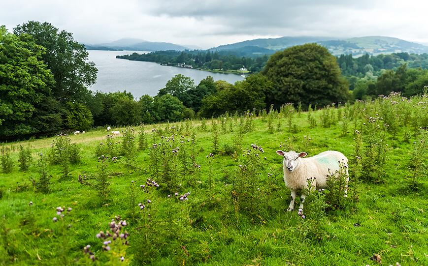 英国湖区国家公园:英国湖区国家公园所在的区域曾给予约瑟夫·特纳(J.M.W. Turner)、威廉·华兹华斯(William Wordsworth)、比阿特丽克斯·波特(Beatrix Potter)等艺术家以灵感。它设立于1951年,拥有陡峭的山谷、花岗岩和16座美丽的湖泊。