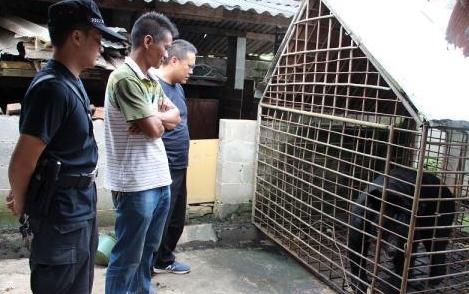 云南农户养黑熊14年 已被公安局没收
